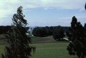 Sicht vom Nähzimmer ins Römerwäldli