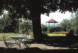 Kastanienbaum im Pavillon